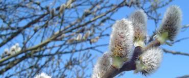 Doorpakken naar de lente